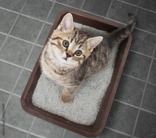 Photo Cat sitting in litter box top view