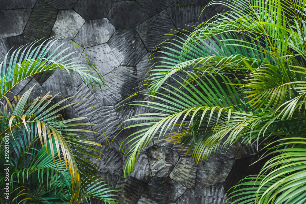 Dark grey concrete stone wall background with green tropical palm leaves. Jungle texture with empty space