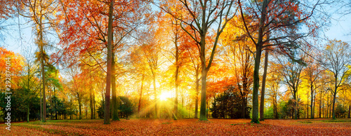 Photo Colorful autumn scenery in a park