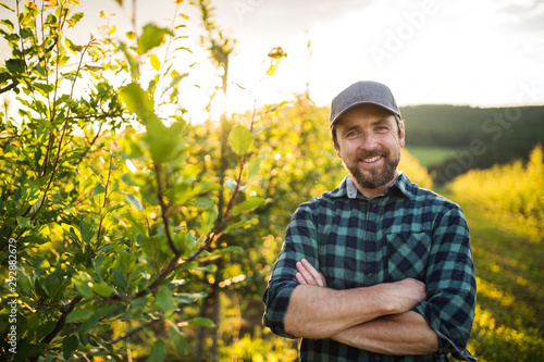 Obraz na plátně A front view of mature farmer standing in orchard at sunset