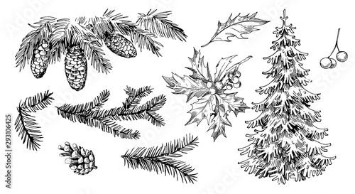 Fotografia Winter plants: holly, cones, spruce