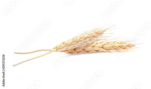 Canvas Ear of barley rice on white background