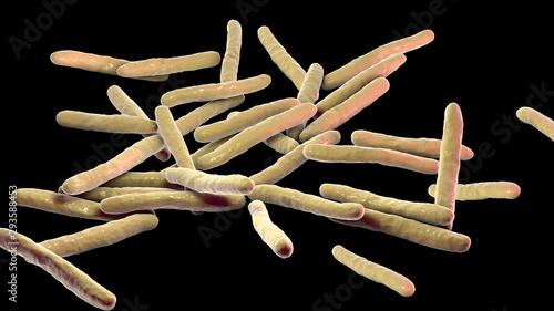 Stampa su Tela Mycobacterium leprae bacteria, the causative agent of leprosy, 3D illustration