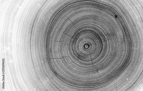 Canvas Print Detailed macro view of felled tree trunk or stump