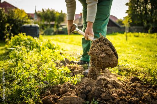 Fotografiet Senior gardener gardening in his permaculture garden -  preparing the ground for
