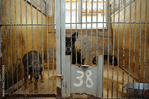 Canvas Print Animal abuse. Sad stray dogs sitting behind bars in the aviary