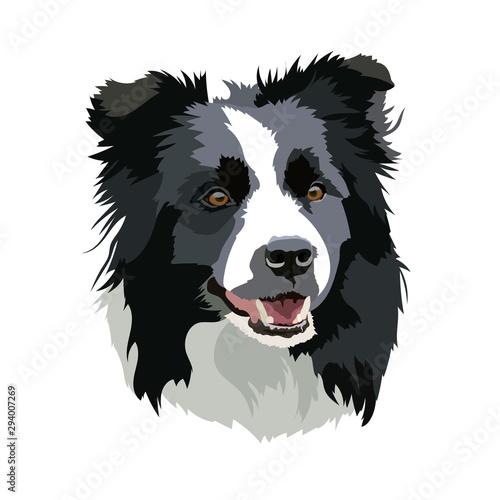 Vector illustration of a Border Collie dog head Fototapete
