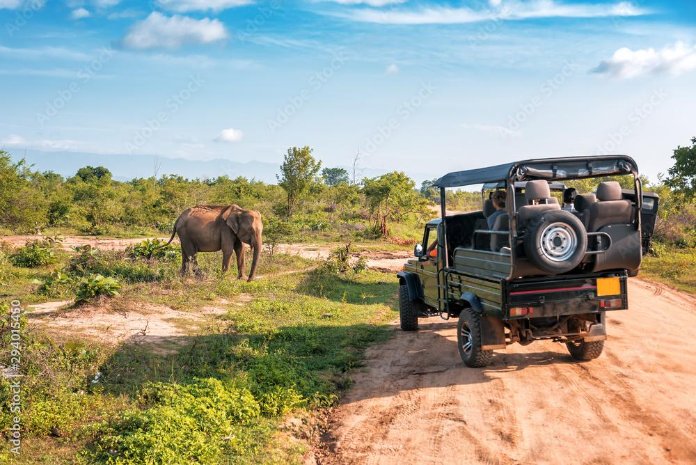 live elephant on safari <span>plik: #294015450 | autor: Volodymyr Shevchuk</span>