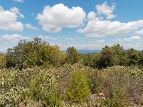 Slika na platnu Paysage de Provence