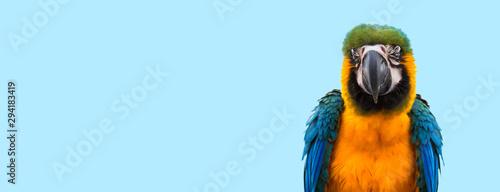 Obraz na płótnie Blue macaw parrot