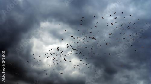 Foto flock of bats in the air, mega bat swarm at dawn