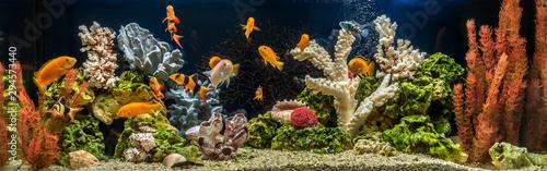 Fotografie, Tablou Freshwater aquarium as pseudo-sea. Aquascape and aquadesign.