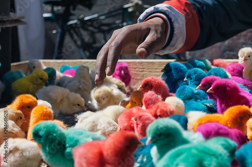 Stampa su Tela Colour chicks in Marrakesh market, Morocco, Africa