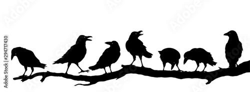 Photo Rabenvögel am Ast, Raben Gruppe Silhouette, Vektor Illustration isoliert auf wei