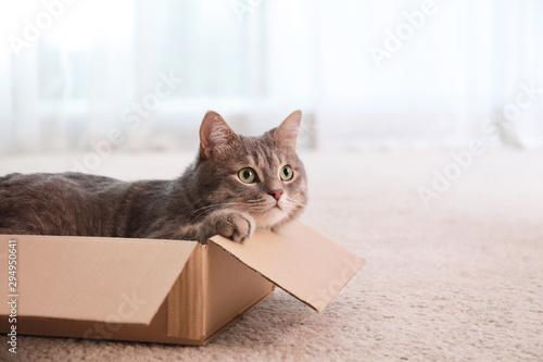 Photo Cute grey tabby cat in cardboard box on floor at home