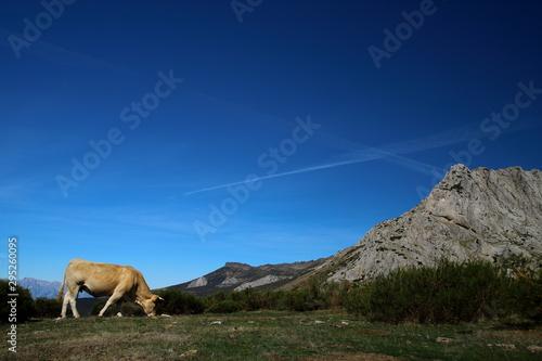 Senda de la Cueva del Cobre, Nacimiento del Rio Pisuerga. Montaña Palentina, Castilla y Leon. España