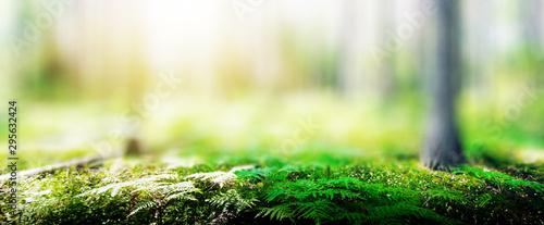 Canvas Print Ecology background