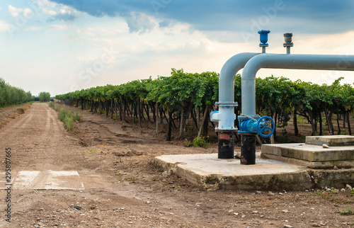 Canvas Print Watering pipes and vineyard.
