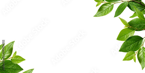 Corners with green leaves