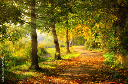 Canvastavla Tranquil footpath in a park in autumn, with beams of light falling through the t