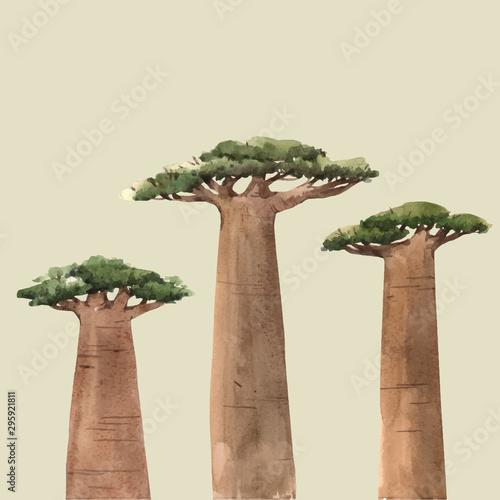 Canvastavla Watercolor vector baobab adansonia african tree illustrations
