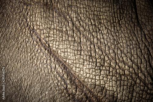 Wallpaper Mural rhino skin, texture of rhino skin for background