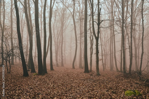 Foggy, misty forest in late autumn, fallen leaves