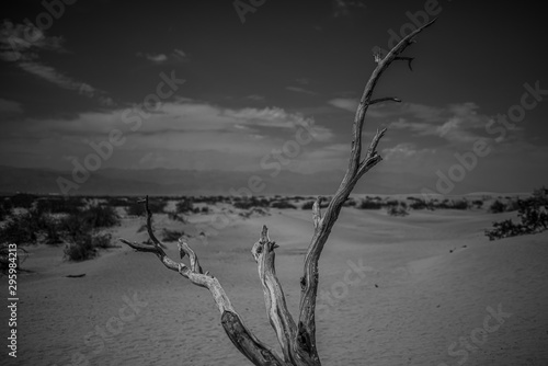 Photo Horizontal greyscale shot of a dry tree stick in the desert surrounded by bushes
