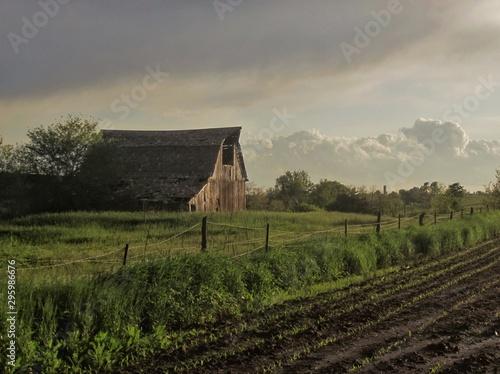Stampa su Tela old barn in field