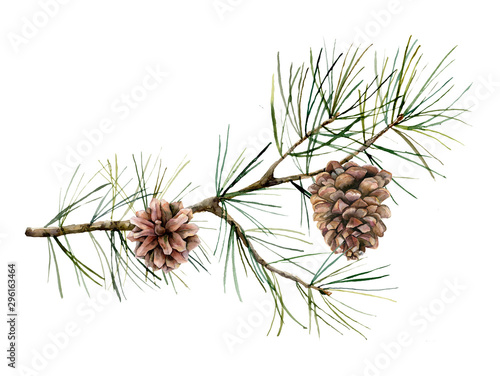 Photo Watercolor botanical set with pine branches and cones