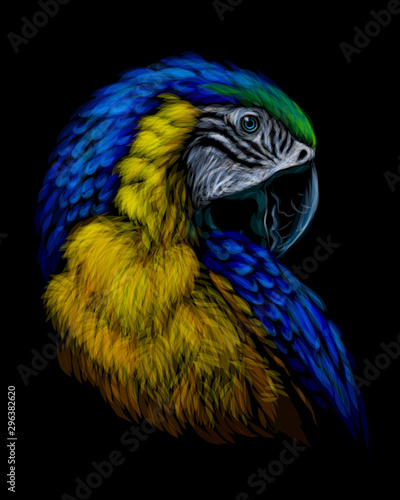 Wallpaper Mural Macaw parrot