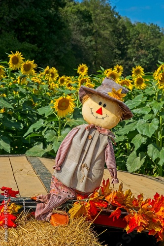 Fotografia Scarecrow decoration in a sunflower field