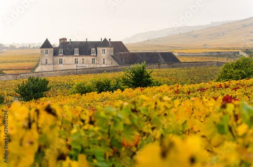 Fotografie, Obraz Le Clos Vougeot en Bourgogne, côte-d'or en automne avec les vignes jaunes