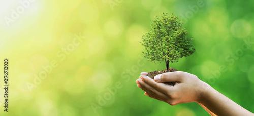 Sadzenie drzew na rękach rodziny wolontariuszy dla koncepcji kampanii przyjaznej środowisku i odpowiedzialności społecznej