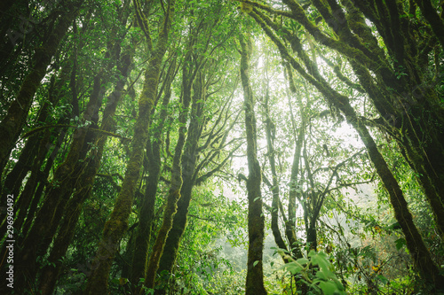 Stampa su Tela Fog in the forest,doi inthanon national park in chaing mai, thailand,Vintage sty