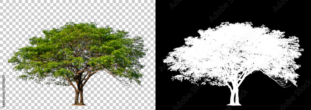 Isolated single tree with clipping path and alpha channel on a transparent picture background. Big tree large image is easy to use and suitable for all types of art work and print. <span>plik: #297061039   autor: Choo</span>