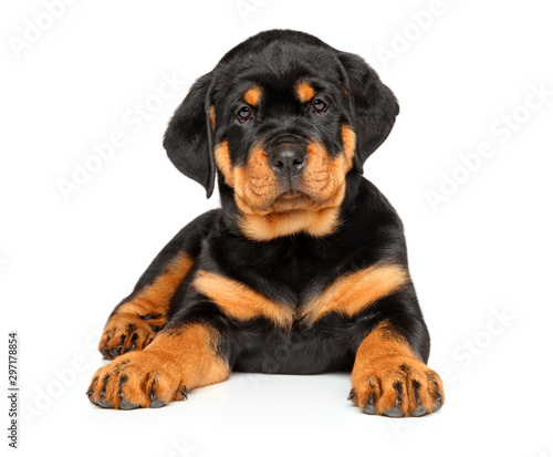 Fotografie, Obraz Rottweiler puppy lying on a white background