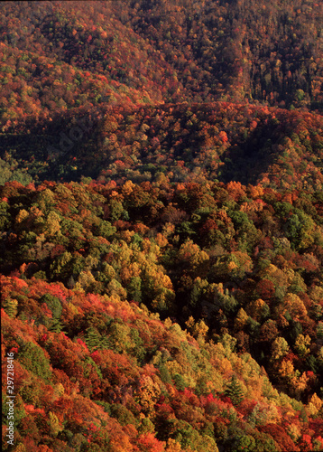 autumn leaves in the moutains