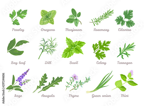 Tableau sur Toile Set of herbs isolated