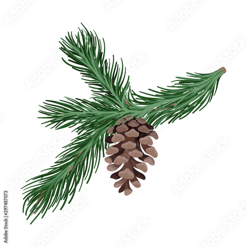 Fotografie, Tablou Branch of spruce with thick needles. Vector illustration.