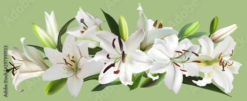 Fotografia isolated on green white large lily flowers stripe