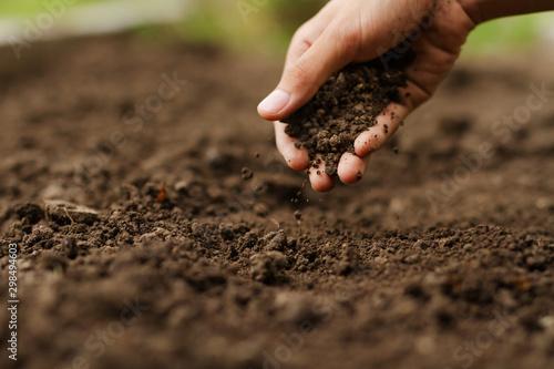 Valokuvatapetti Expert hand of farmer checking soil health before growth a seed of vegetable or plant seedling