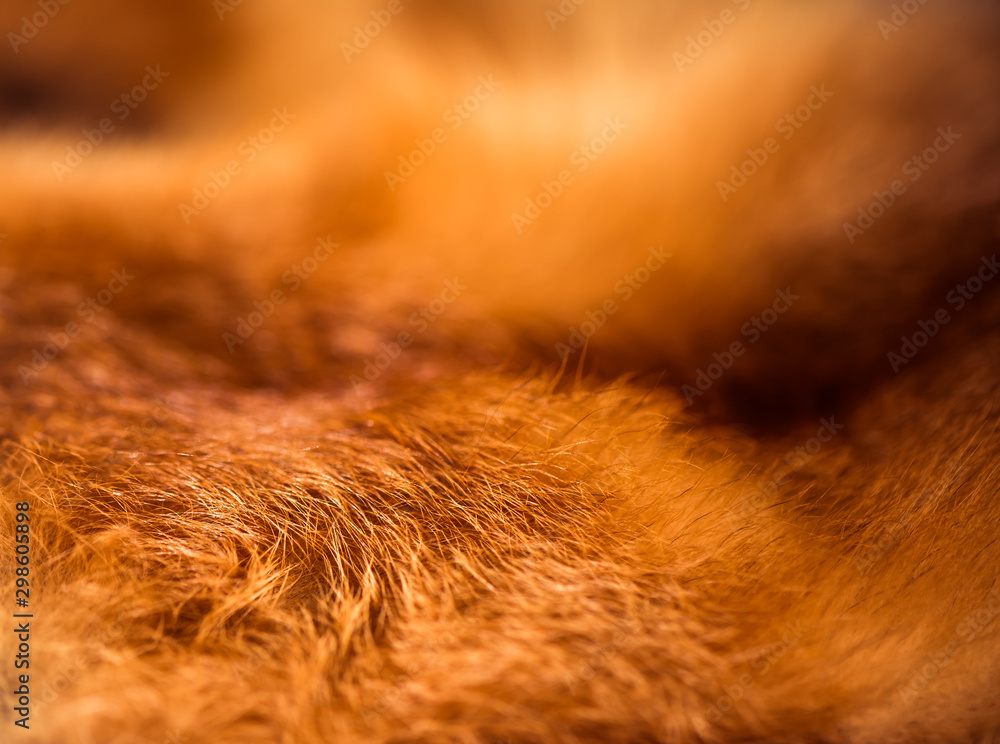 golden color fox wool texture closeup <span>plik: #298605898 | autor: arts</span>