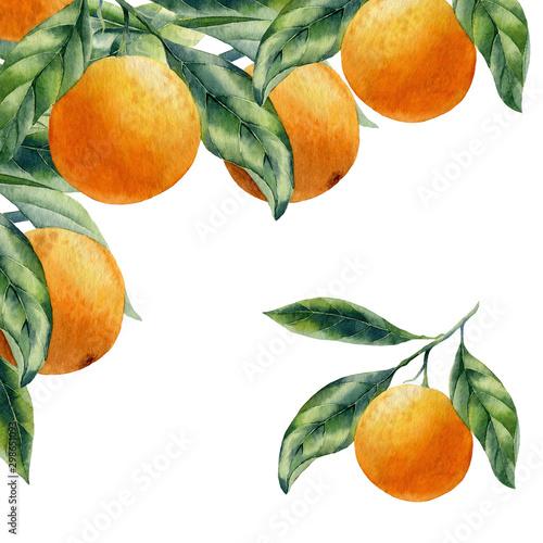 watercolor fruit orange branch