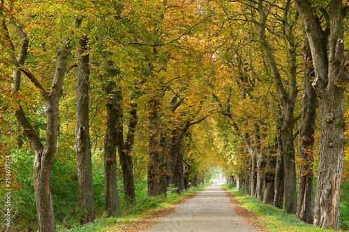 Allee im Herbst Fotobehang