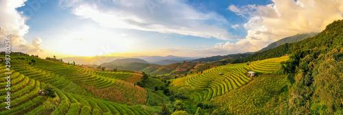 Panorama Aerial View sunlight at twilight of Pa Bong Piang terraced rice fields, Fototapeta