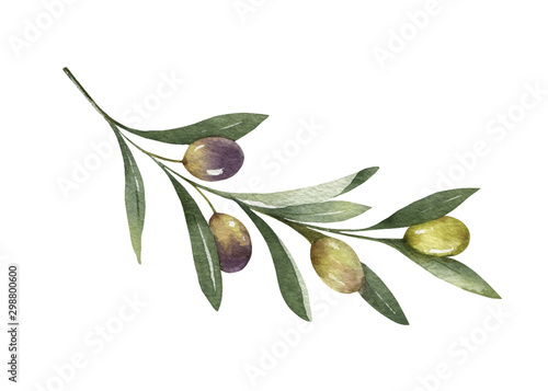 Leinwand Poster Watercolor vector olive branch with leaves and fruits.