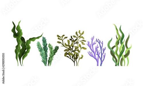 Fotografie, Obraz Set of green algae. Vector illustration on a white background.