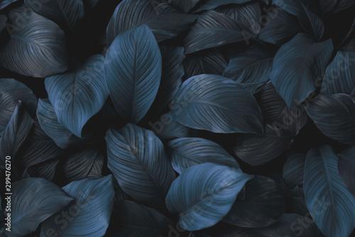 Carta da parati leaves of Spathiphyllum cannifolium, abstract green texture, nature background,