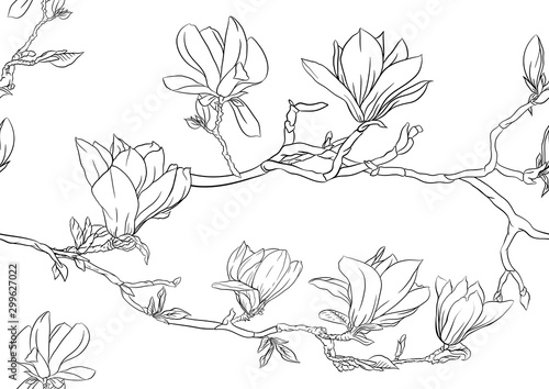 Tela Magnolia tree branch with flowers